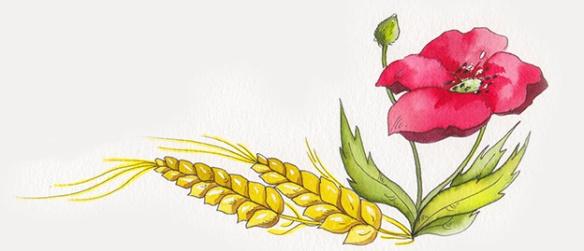 flor de camp