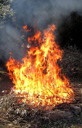 foc 7