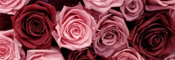 un munt de roses