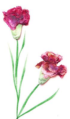 tarja clavells