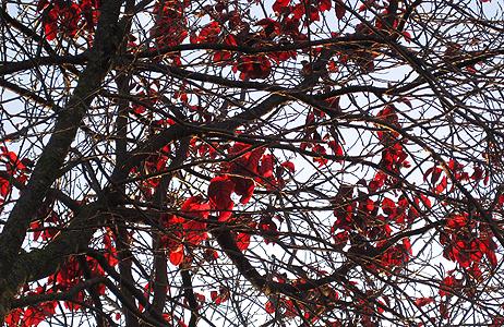 vermell hivernal 2
