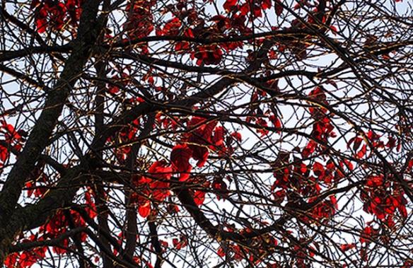 vermell-hivernal-2