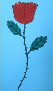 rosa-Cèlia2