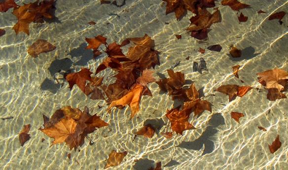 fulles-hivern1